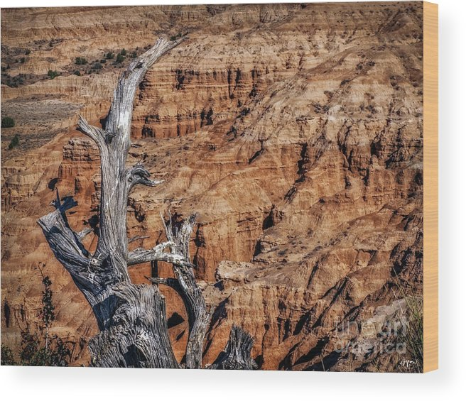 Late Afternoon Wood Print featuring the photograph Canyon View Nevada by Joseph Yvon Cote