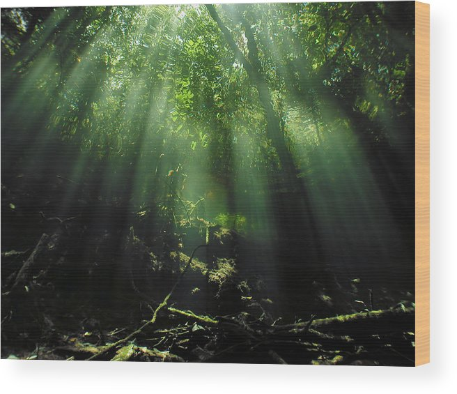 Scuba Wood Print featuring the photograph Cave Diving In Mexico by Christine Till
