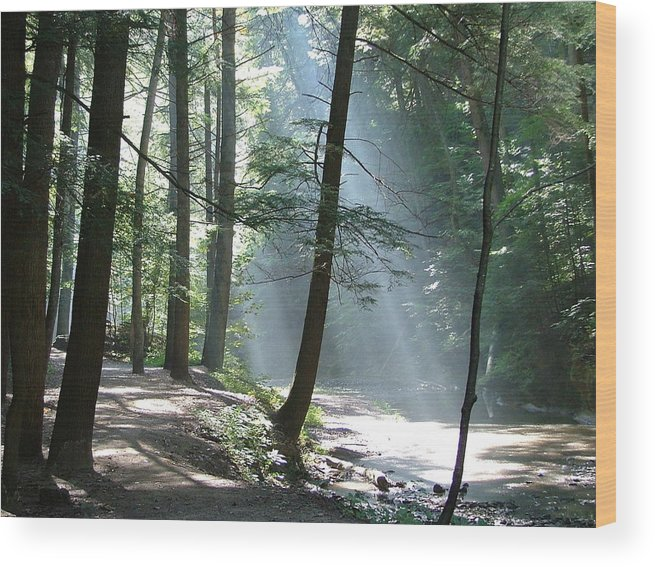 Photo Wood Print featuring the photograph Cedar Falls by Mindy Newman