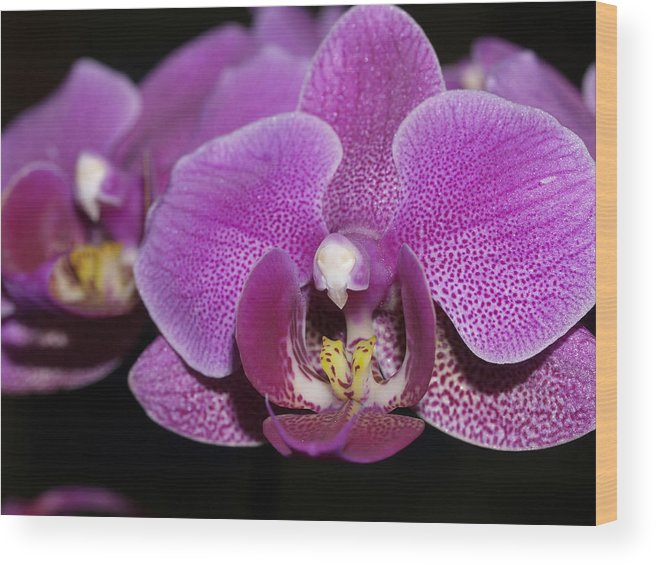 Orchids Wood Print featuring the photograph Center Of Attention by Joyce Hutchinson