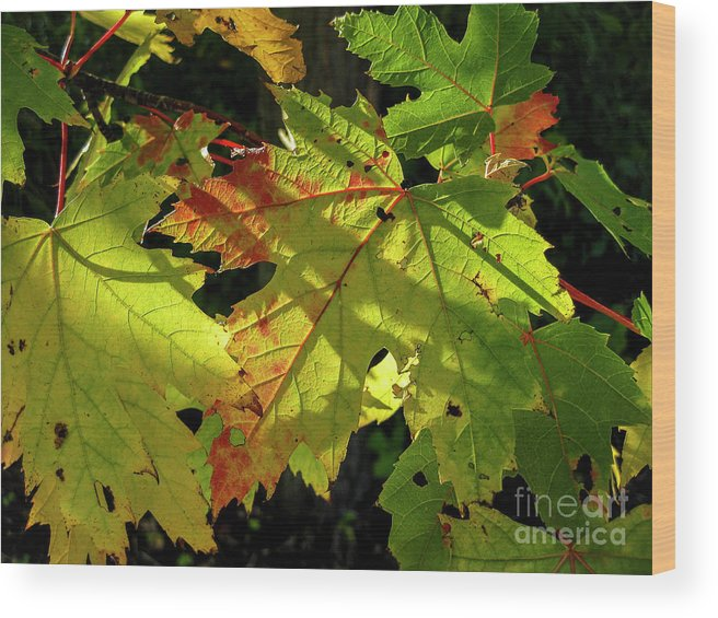 Ginger Woods Wood Print featuring the photograph Changing Colors by David Foote