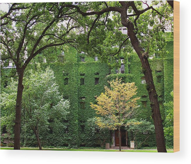 Ivy Wood Print featuring the photograph Chicago Campus by Caroline Urbania Naeem