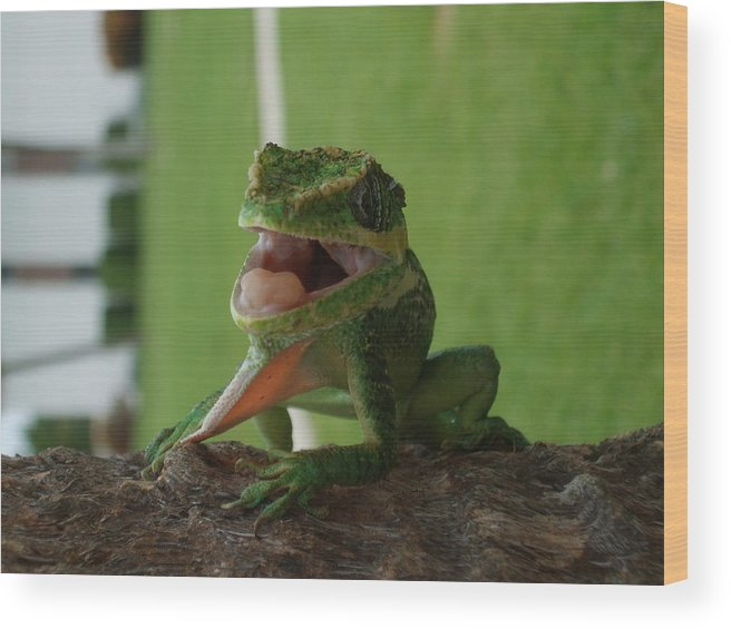 Iguana Wood Print featuring the photograph Chilling On Wood by Rob Hans