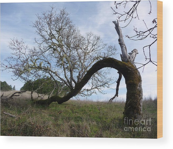 Tree Wood Print featuring the photograph Choosing Life by JoAnn SkyWatcher