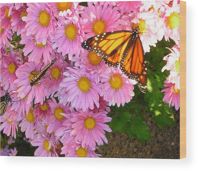 Butterfly Wood Print featuring the photograph Cliff House Butterflies by Heather Weikel