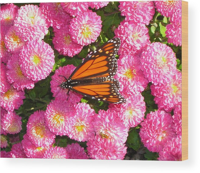 Butterflies Wood Print featuring the photograph Cliff House Butterflies Ll by Heather Weikel