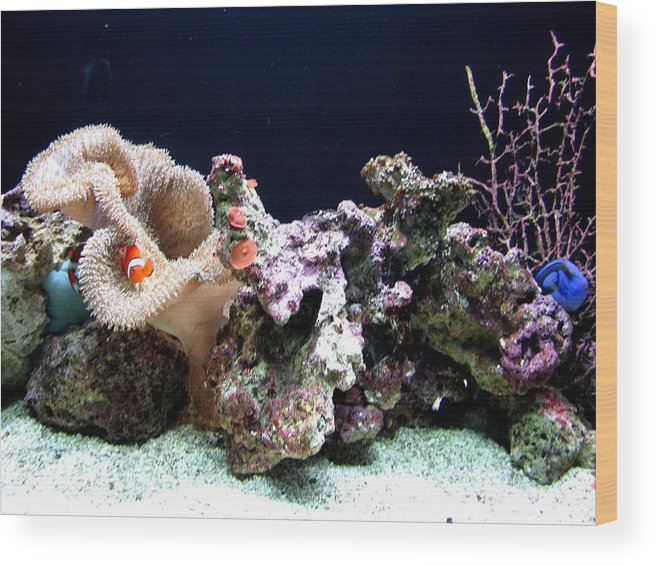 Fish Wood Print featuring the photograph Clown Fish Reef by Jess Thorsen
