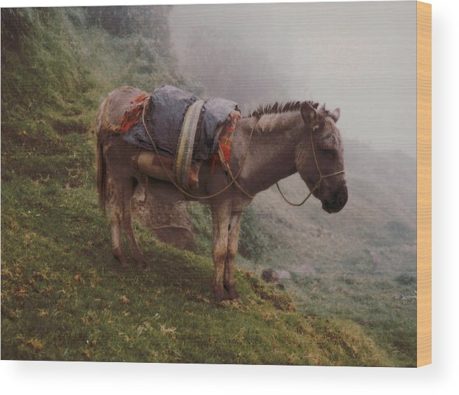 Donkey Wood Print featuring the photograph Colombian Burro In The Fog by Lawrence Costales