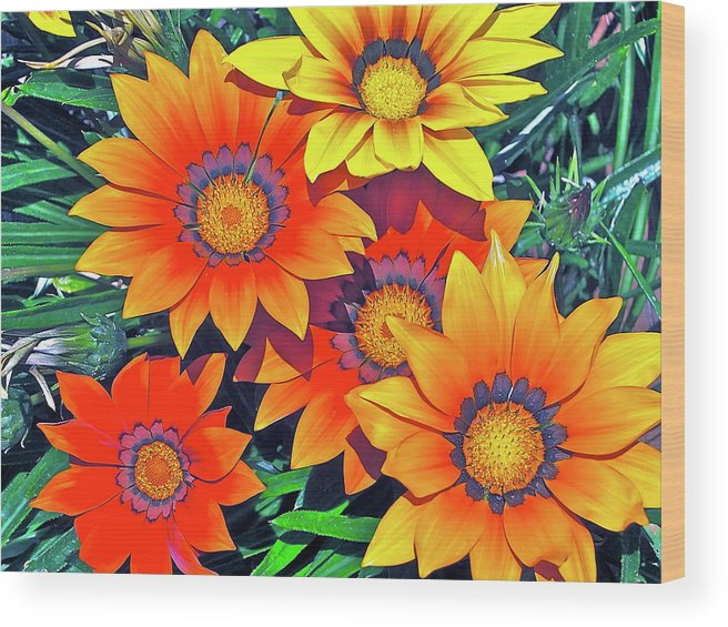 Flowers Wood Print featuring the photograph Color 53 by Pamela Cooper