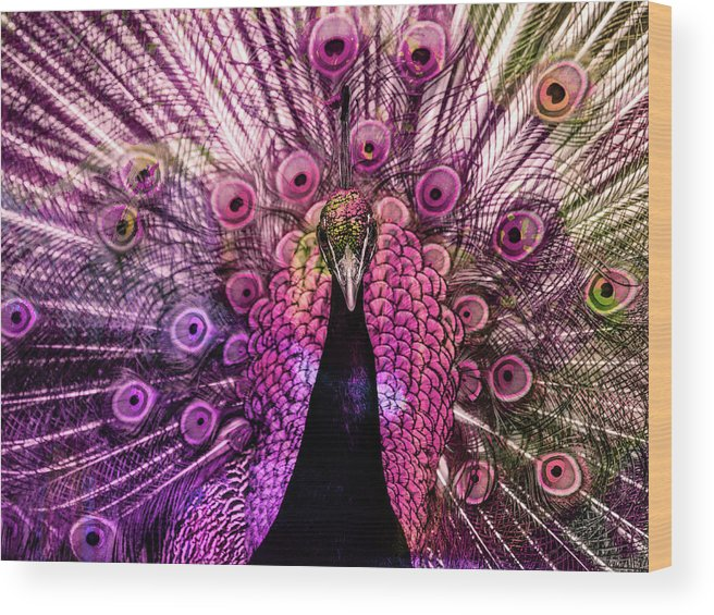 Peacock Wood Print featuring the digital art Colorful Peacock by Gabi Hampe