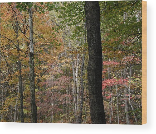 Fall Wood Print featuring the photograph Colors by Bj Hodges