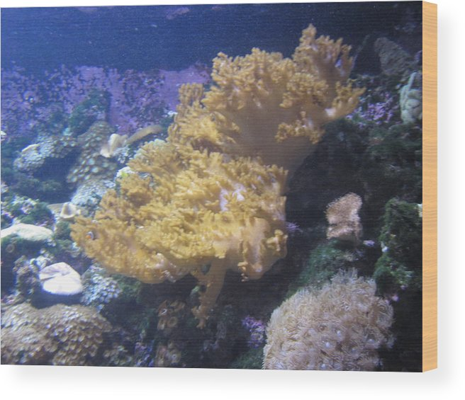 Wood Print featuring the photograph Coral by Miss McLean