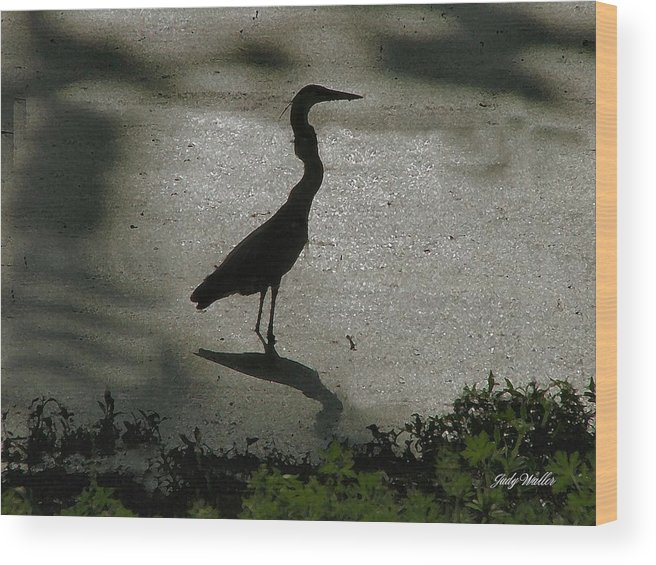 Bird Wood Print featuring the photograph Crane Reflections by Judy Waller