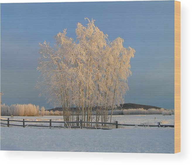 Snow Wood Print featuring the photograph Creamer Field by Louise Magno