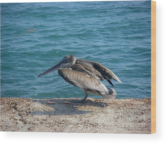 Nature Wood Print featuring the photograph Creatures Of The Gulf - Scratch N' Sniff by Lucyna A M Green