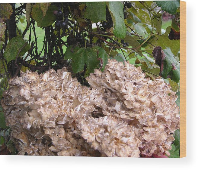 Mushroom Wood Print featuring the photograph Cresta Del Gallo by Peter Williams
