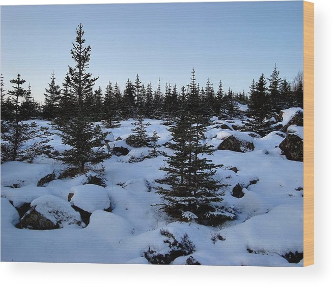 Evergreens And Snow Wood Print featuring the photograph Crisp Clear Morning by Marilynne Bull