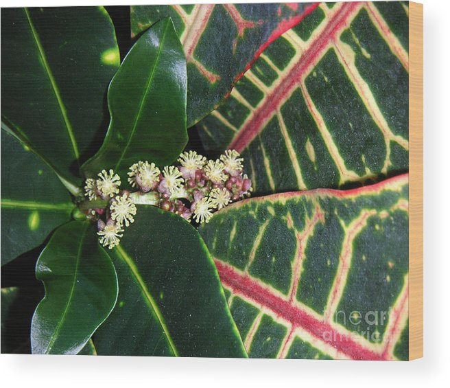 Nature Wood Print featuring the photograph Croton Blooming by Lucyna A M Green