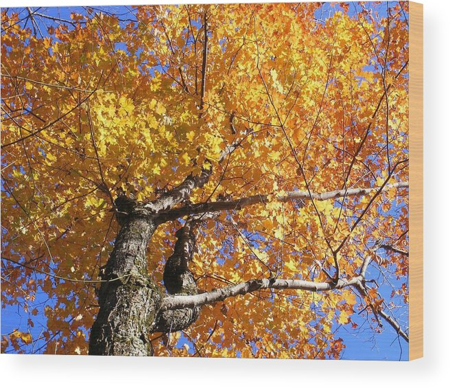 Trees Wood Print featuring the photograph Crown Fire by Dave Martsolf
