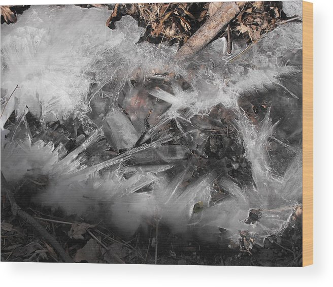 Ice Wood Print featuring the photograph Crystal Clamshell by john Kuti