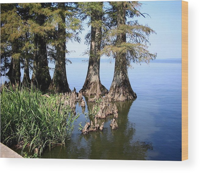 Reelfoot Lake Wood Print featuring the photograph Cypress by CGHepburn Scenic Photos
