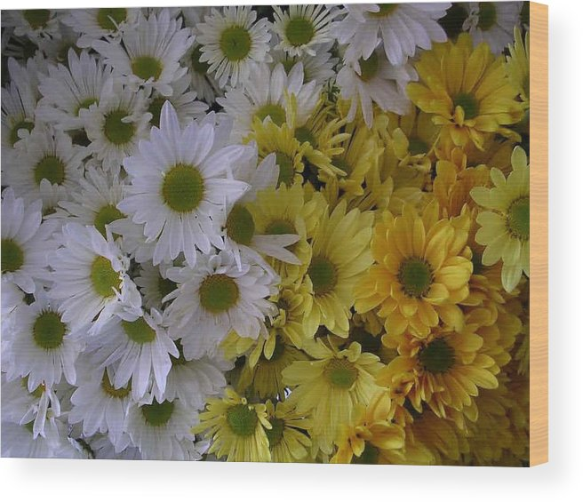 Daisies Wood Print featuring the photograph Daisies by Nancy Ferrier