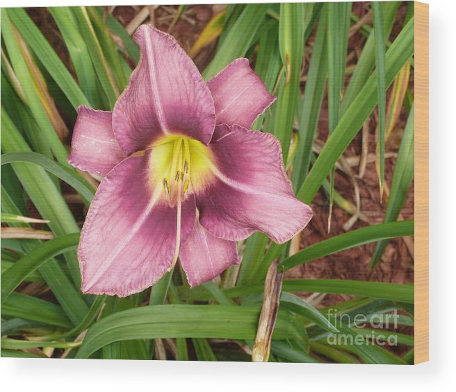 Flowers Wood Print featuring the photograph Daylilly by Barb Montanye Meseroll