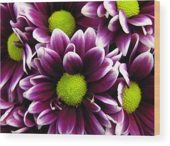 Purple Wood Print featuring the photograph Delicate Purple by Rhonda Barrett