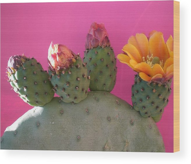 Cactus Wood Print featuring the photograph Desert Jewels IIi by Aleksandra Buha