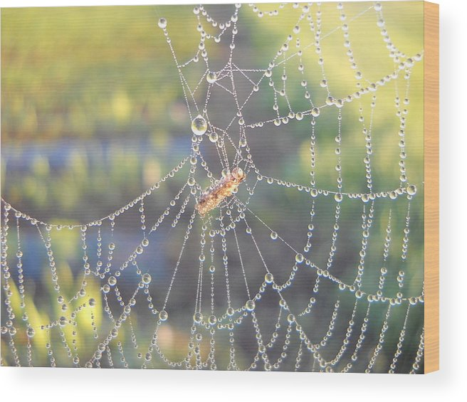 Morning Dew Wood Print featuring the photograph Dew Drops On A Spider Web by Kent Lorentzen