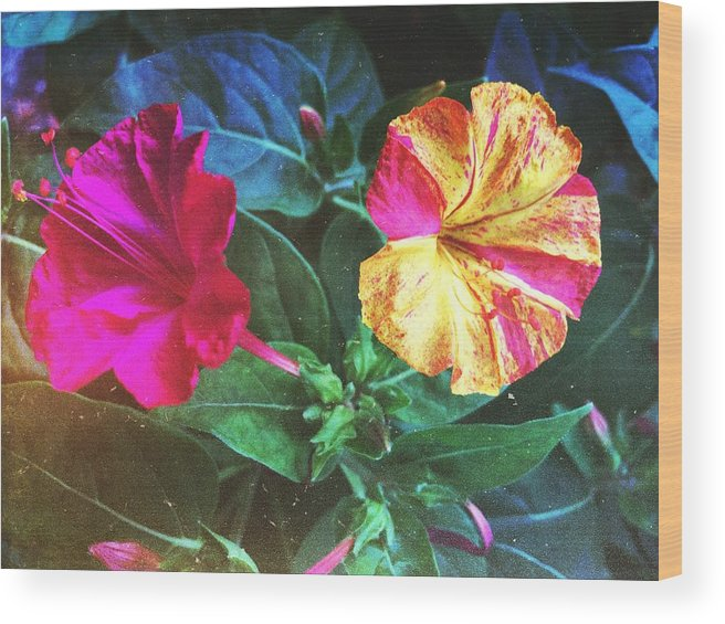 Petunia Wood Print featuring the photograph Different Twins by Jorge Anton