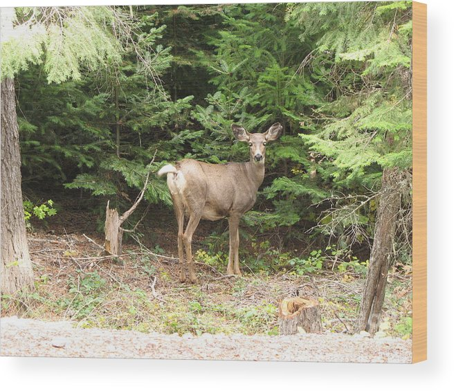 Deer Wood Print featuring the photograph Doe At Suttle Lake by Juli House