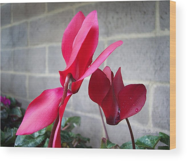 Flower Wood Print featuring the photograph Dominance by Donna Blackhall