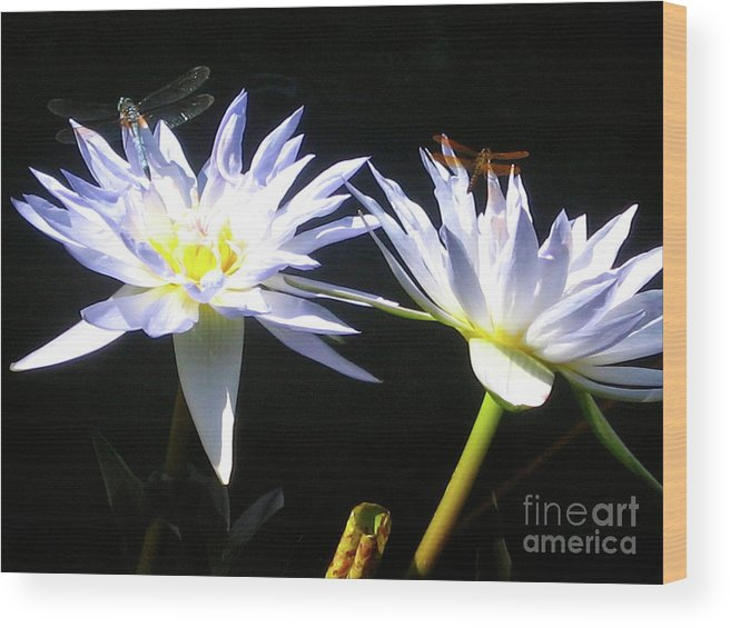 Dragonfly Wood Print featuring the photograph Dragonfly Lily by Elizabeth Donald