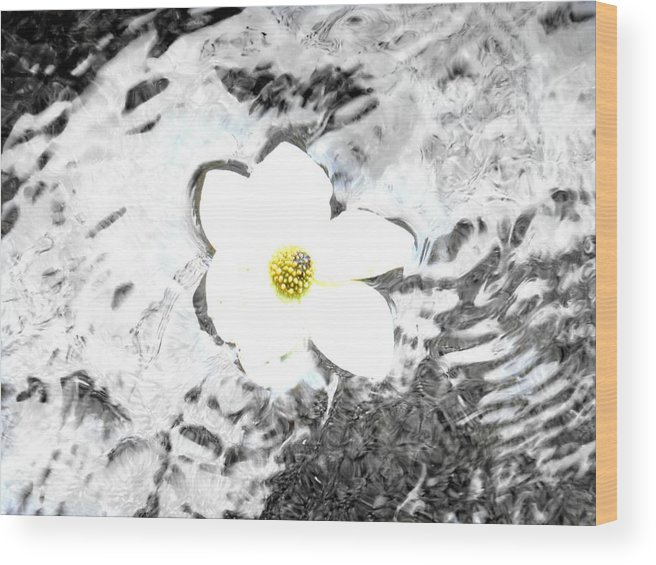 Water Wood Print featuring the photograph Drifting Beauty by Melissa KarVal