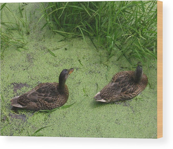 Duck Wood Print featuring the photograph Ducks In Pond by Melissa Parks