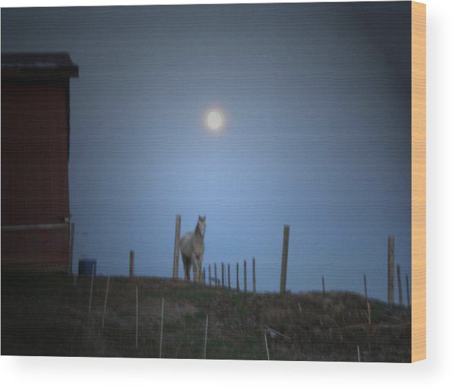 Horse Wood Print featuring the photograph Dusty by Martie DAndrea