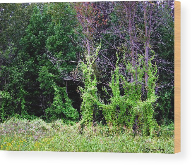 Pine Falls Manitoba Vines Landscape Wood Print featuring the photograph Enchanted by Joanne Smoley