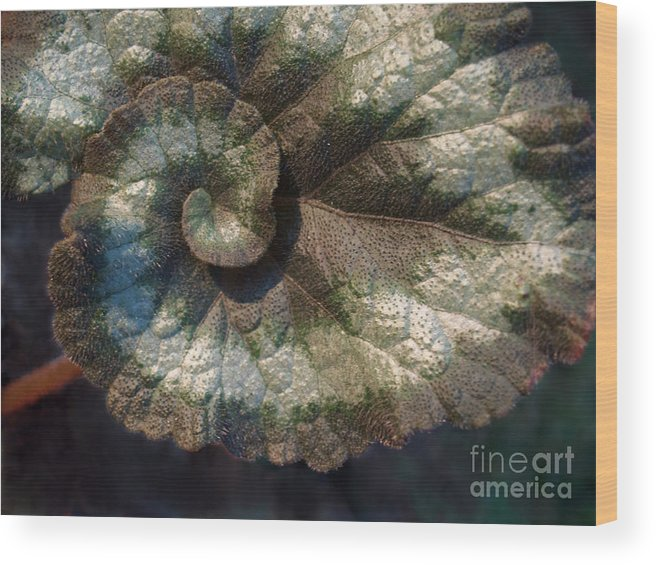 Escargot Wood Print featuring the photograph Escargot Begonia by Anna Lisa Yoder
