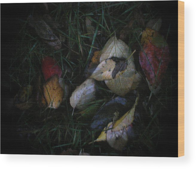 Nature Wood Print featuring the photograph Evening Light by Marilynne Bull