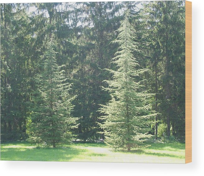 Dance Wood Print featuring the photograph Evergreen Dance by Peter Antos