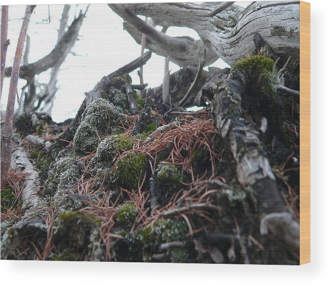 Roots Wood Print featuring the photograph Exposed Roots II by Eric Peterson