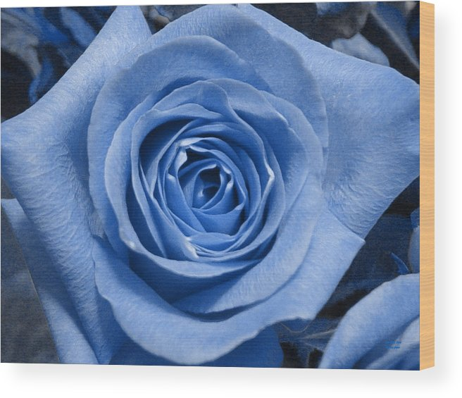 Rose Wood Print featuring the photograph Eye Wide Open by Shelley Jones