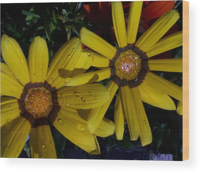 Flowers Wood Print featuring the photograph Eyes For You by Vijay Sharon Govender