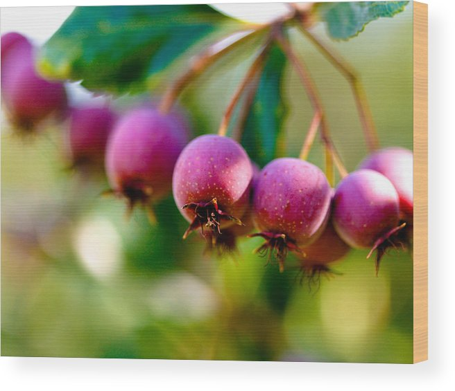 Berry Wood Print featuring the photograph Fall Berries by Marilyn Hunt