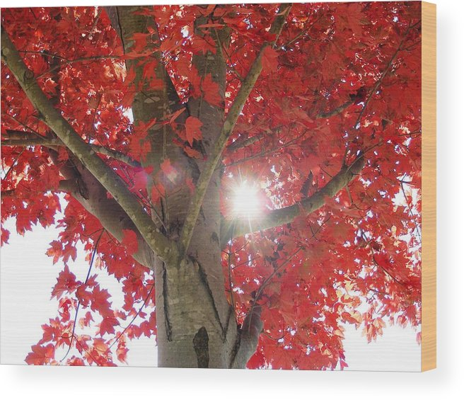 fall Leaves Wood Print featuring the photograph Fall In Georgia by Linda Russell
