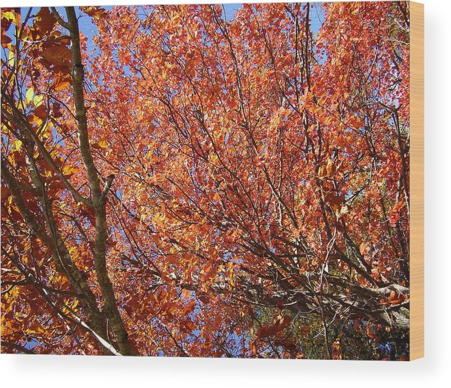 Fall Wood Print featuring the photograph Fall In The Blue Ridge Mountains by Flavia Westerwelle