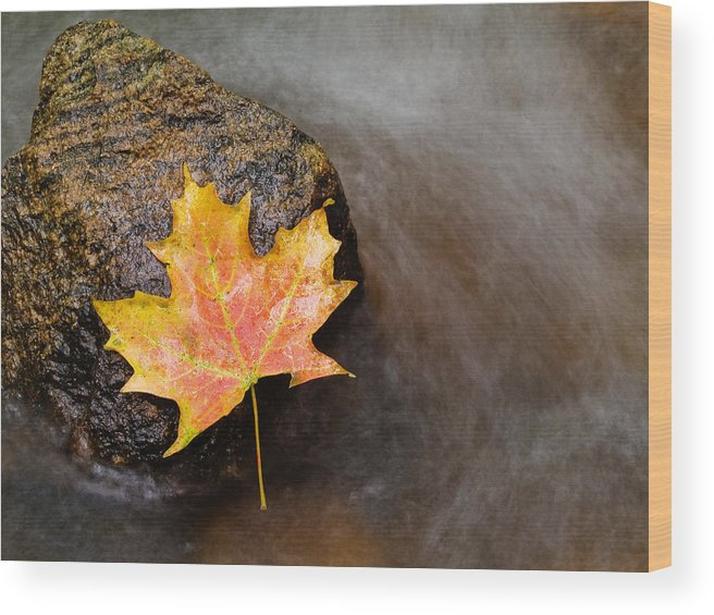 Leaf Wood Print featuring the photograph Fallen Leaf by Jim DeLillo