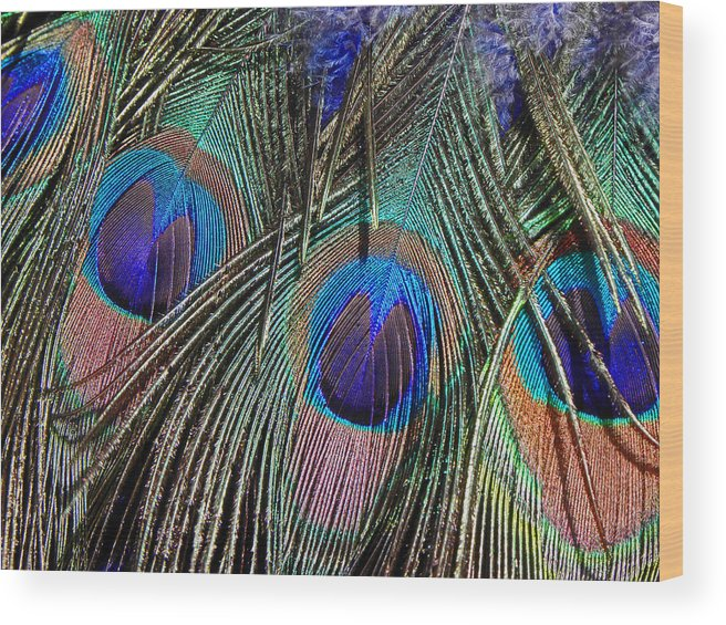 Digital Wood Print featuring the photograph Feathers by Elizabeth Hoskinson