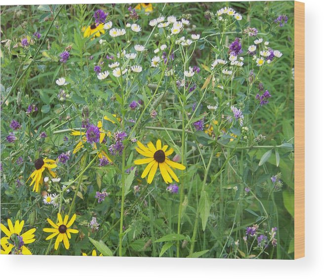 Flowers Wood Print featuring the photograph Field Of Wildflowers by Donna Davis